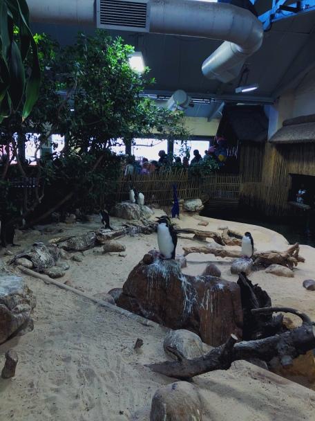 Penguins in the aquarium