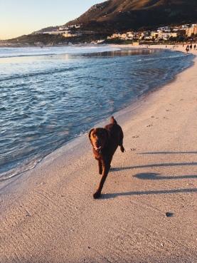 pupper on the beach!