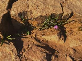 Flower in the (scary) rocks on Lion's Head