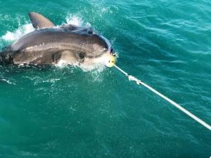 this was shark bait (hoo ha ha)