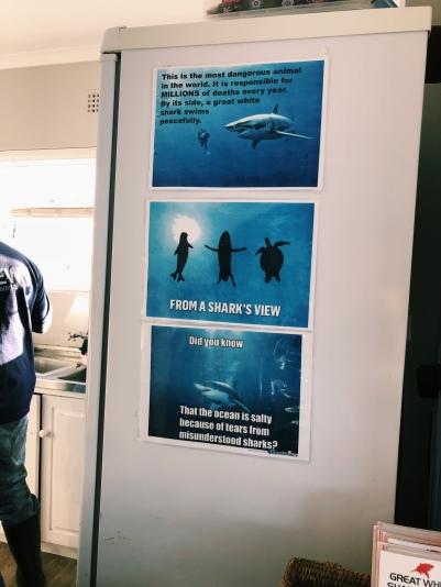 10/10 memes in the shark diving office